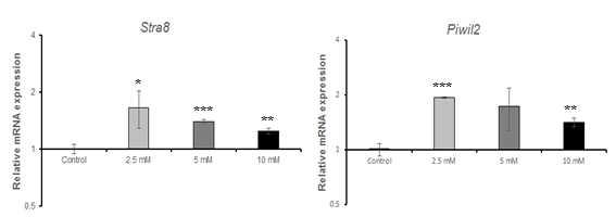 qRT-PCR을 이용한 n-butyl chloride(NBC)에 대한 수컷 생식줄기세포 독성