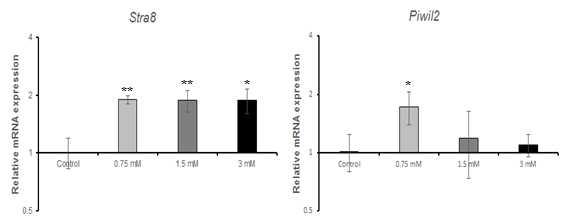 qRT-PCR을 이용한 5-bromo-2'-deoxyuridine(BrdU)에 대한 수컷 생식줄기세포 독성