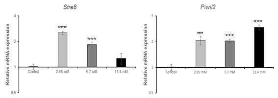qRT-PCR을 이용한 salicylic acid sodium salt(SASS)에 대한 수컷 생식줄기세포 독성