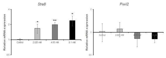 qRT-PCR을 이용한 valproic acid(VPA)에 대한 수컷 생식줄기세포 독성