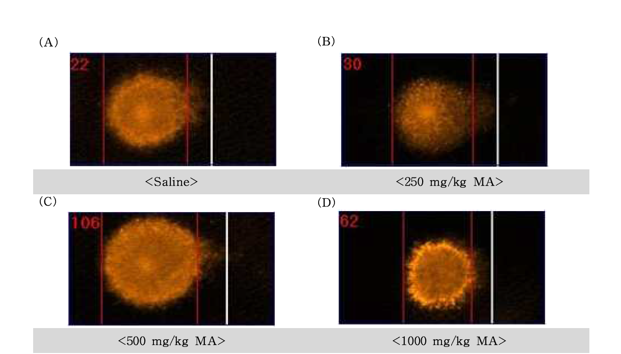 D-mannitol(MA)에 대한 정자의 comet image