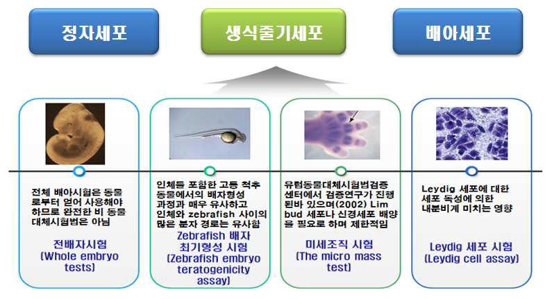생식독성시험에서의 정자세포, 생식줄기세포 및 배아줄기세포 비교