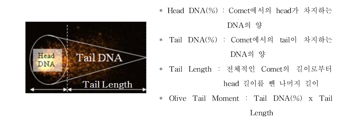 Comet 형태 및 Head DNA(%), Tail DNA(%), Tail Length, Olive Tail Moment에 관한 설명