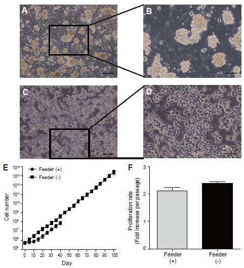 Matrigel에서의 수컷 생식줄기세포의 in vitro 배양
