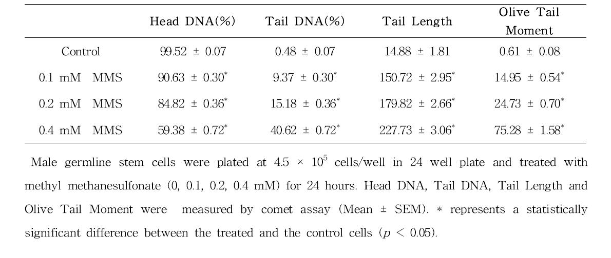 Comet assay를 이용한 methyl methanesulfonate(MMS)에 대한 수컷 생식줄기세포 독성