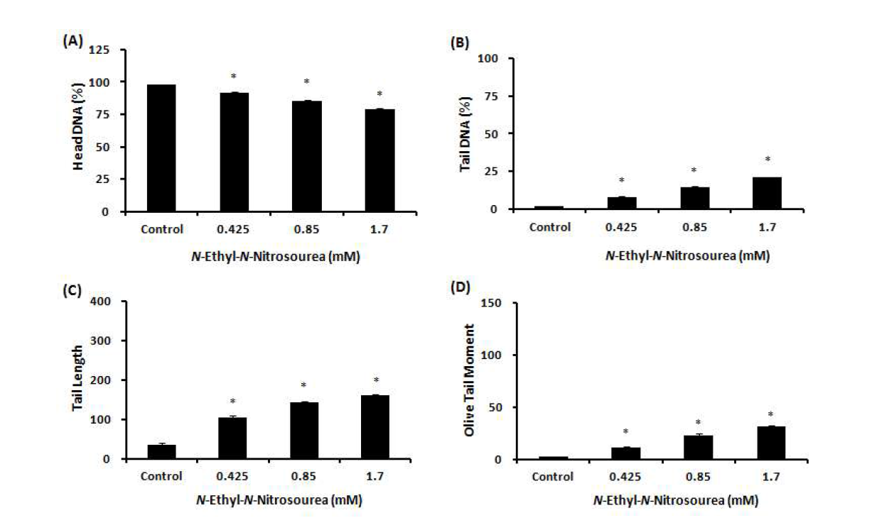 Comet assay를 이용한 N-Ethyl-N-Nitrosourea(ENU)에 대한 수컷 생식줄기세포 독성