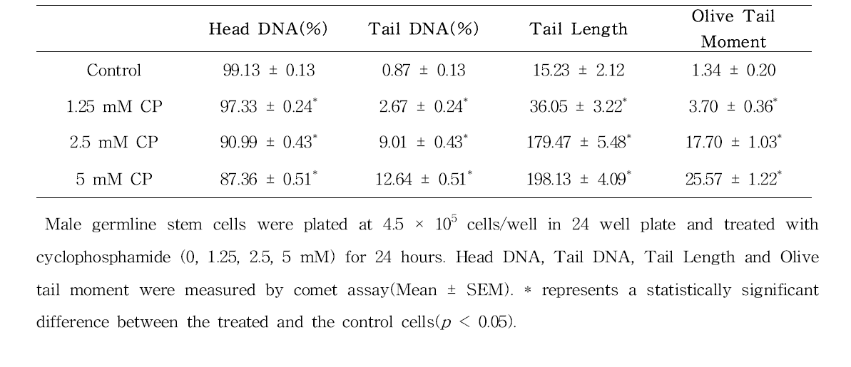 Comet assay를 이용한 cyclophosphamide(CP)에 대한 수컷 생식줄기세포 독성