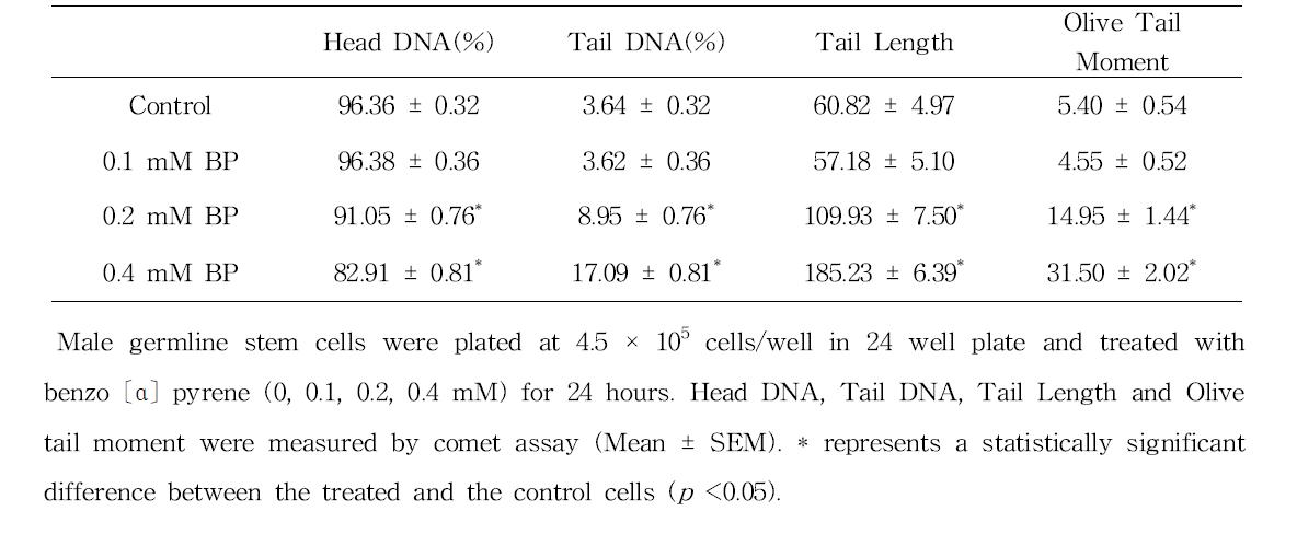 Comet assay를 이용한 benzo〔α〕pyrene(BP)에 대한 수컷 생식줄기세포 독성