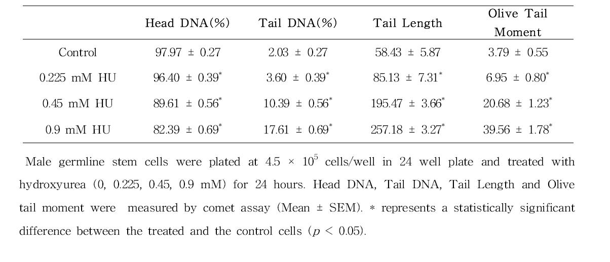 Comet assay를 이용한 hydroxyurea(HU)에 대한 수컷 생식줄기세포 독성