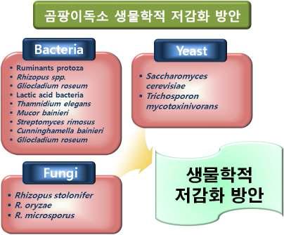 곰팡이독소 저감화에 사용되는 생물학적 방법들