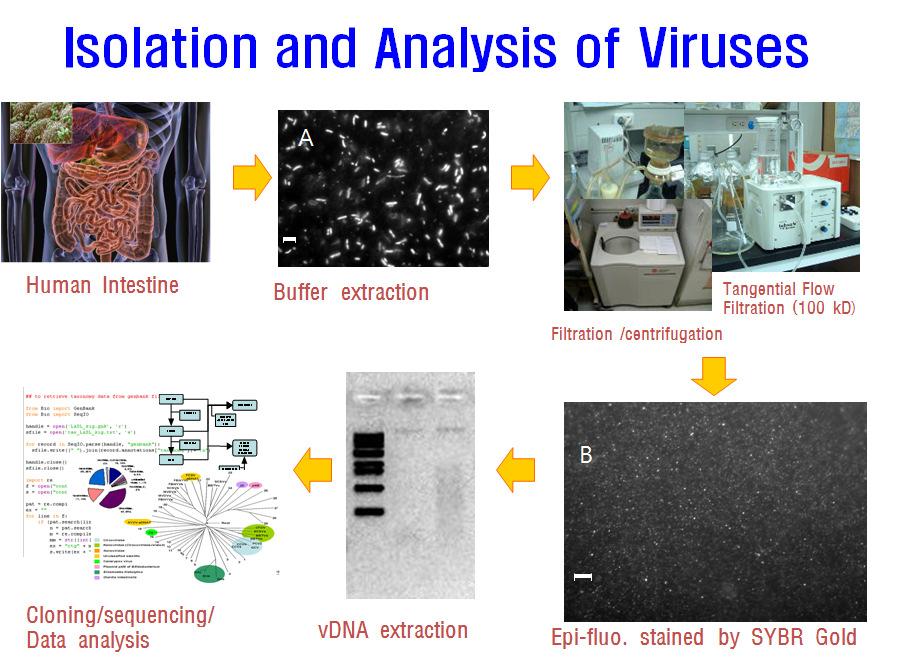 장내 바이러스 메타지놈 분석 방법