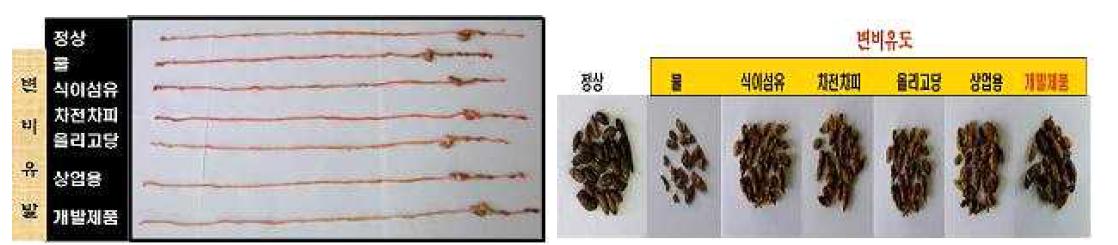 식이섬유스틱 섭취후 장길이 조사(좌) , 변갯수 조사(우)
