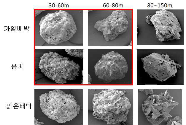 배박과 유과 크기별 전자현미경 사진