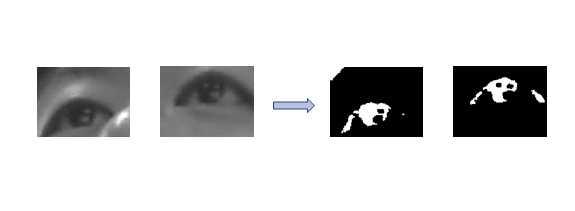눈영역의 역이진화