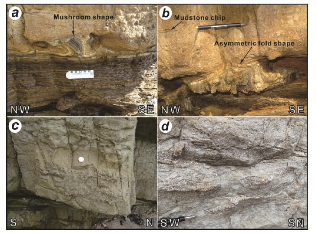 죽막지역에서 관찰되는 교란층리(a & b) 및 벌금리층 하부에서 관찰되는 짐구조(c & d).