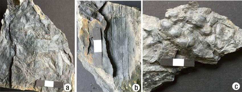 초락도리 일대 석문층에서 산출된 화석.