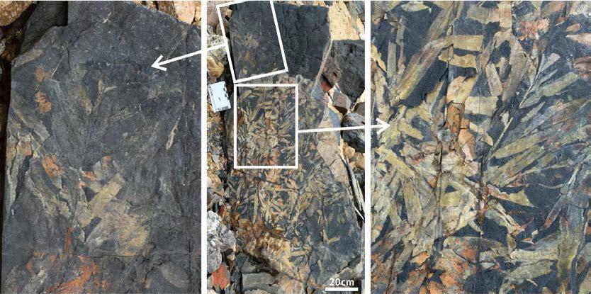 대난지도 일대 석문층에서 산출된 식물화석
