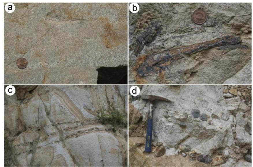 테토리층군 사암의 상향세립 조직(a), 식물화석(b), 규암역 층(c), 아원상의 규암역(d).