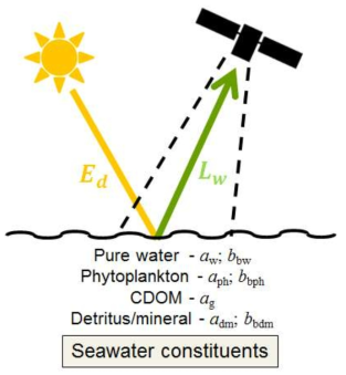 Reflectance influenced by concentrations of seawater constituents
