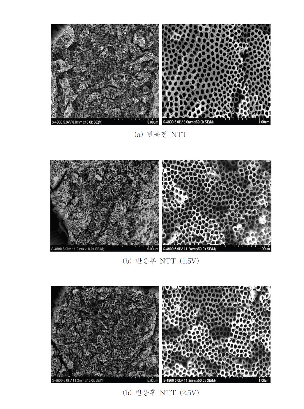 다양한 전압하에서 반복실험에 의한 NTT의 SEM 분석