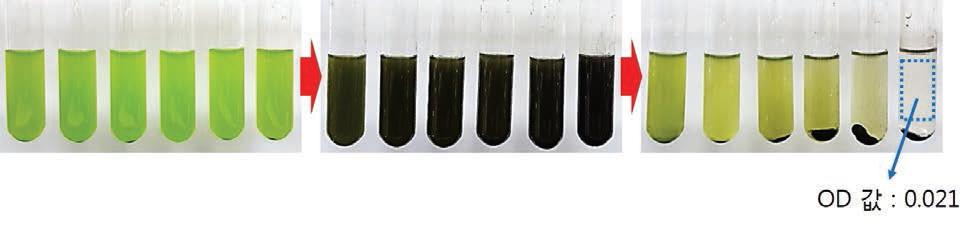 미세조류용액에 자성응집제를 넣었을 때, 수확 후의 디지털 사진