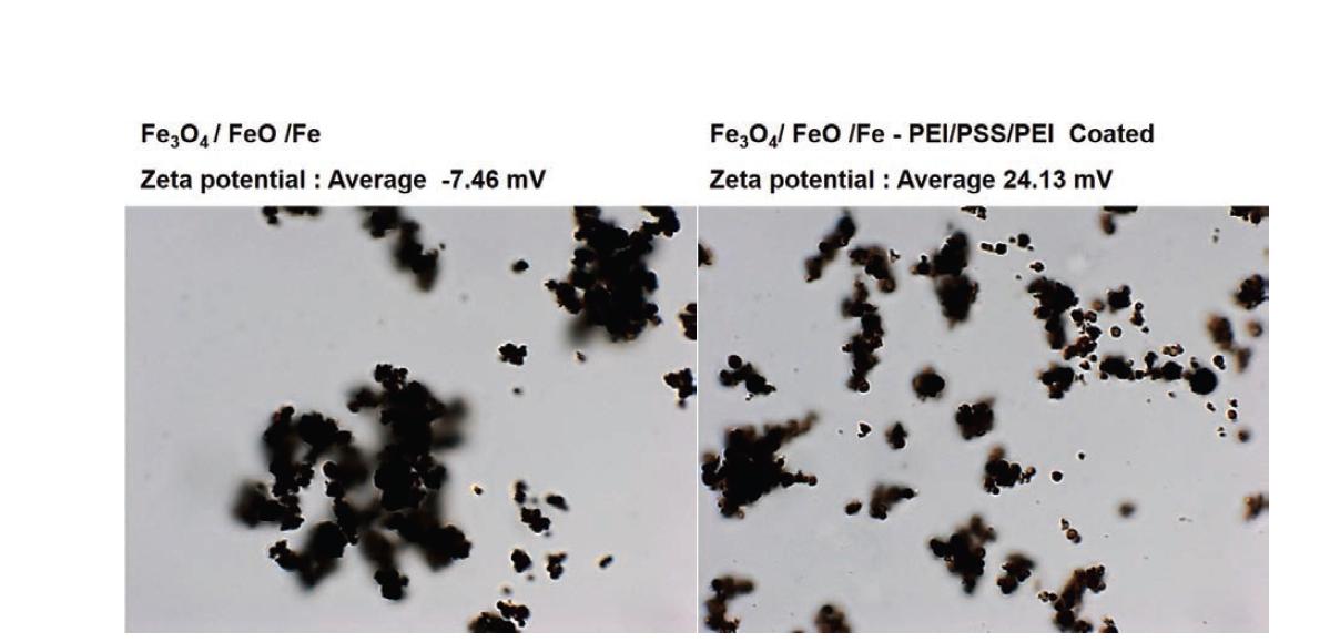 Hollow Fe3O4의 Bare상태와 LBL 코팅 후의 광학현미경 관찰 사진