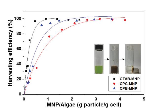 양이온성 계면활성제 개질된 Fe3O4 나노 입자의 모델 균주 회수율 그래프