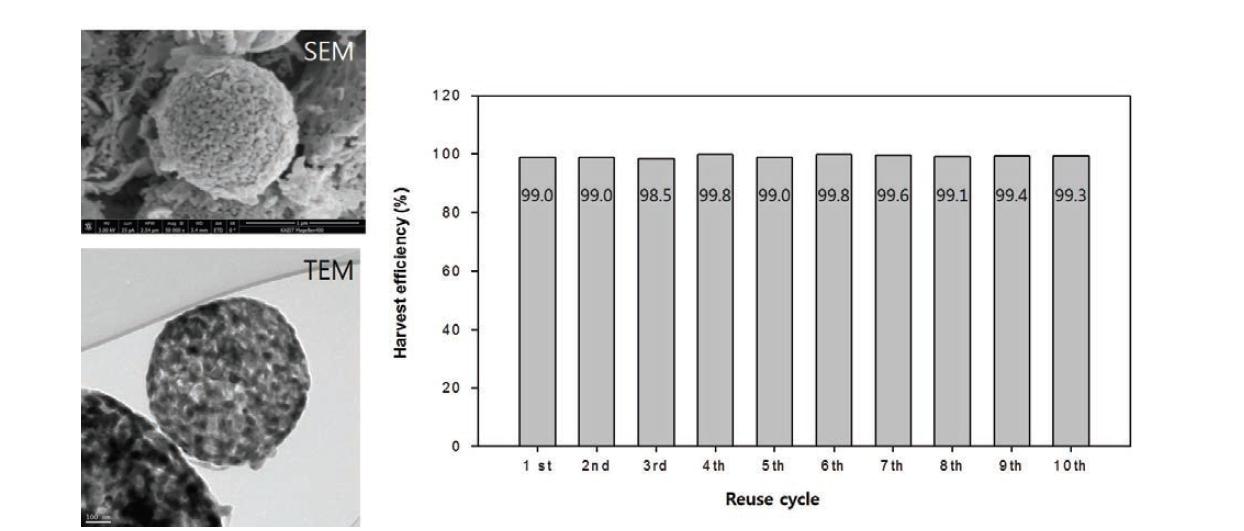 자성응집제 재사용 테스트시 측정한 현미경 사진과 재사용효율 측정