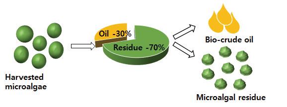 모델 균주 Chlorella sp. KR-1의 지질 함량