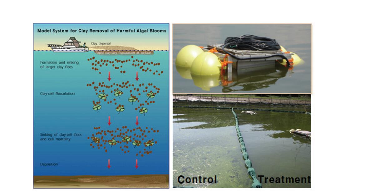 황토살포를 통한 녹조침전 www.serc.si.edu, 생명공학연구원의 초음파이용 기술
