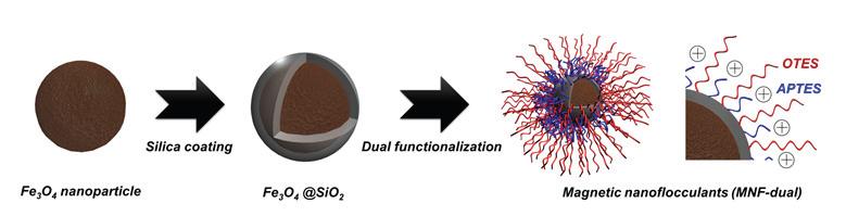 표면 기능기(APTES와 OTES)의 비율이 조절된 silica-coated Fe3O4 nanoparticle 합성 개요도