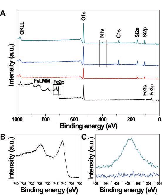 기능기 코팅 자성나노입자의 XPS (X-ray photoelectron spectroscopy) 분석 위에서 순서대로 (i) Fe3O4 (ii) Fe3O4@SiO2 (iii) Fe3O4@SiO2?OTES (iv) Fe3O4@SiO2?OTES/APTES