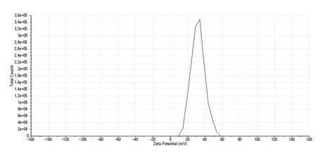 제타표면전위(zeta potential) 분석