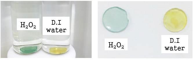 감염 센서를 흡착한 항균단량체(이타콘산) 도입 하이드로겔