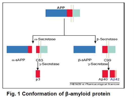 β-secretase에 의한 β -amyloid 형성 기작