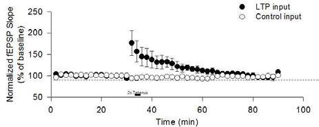 알츠하이머 유도쥐의 LTP 형성 실패