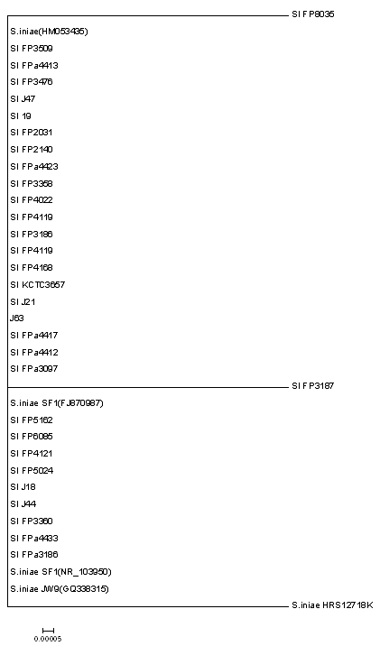 Phylogenetic tree of 16S rDNA of genome sequenced S. iniae
