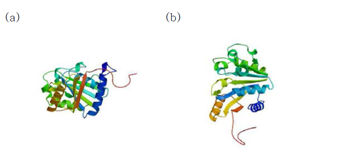 Structure of S. iniae cpsD protein of each genotype