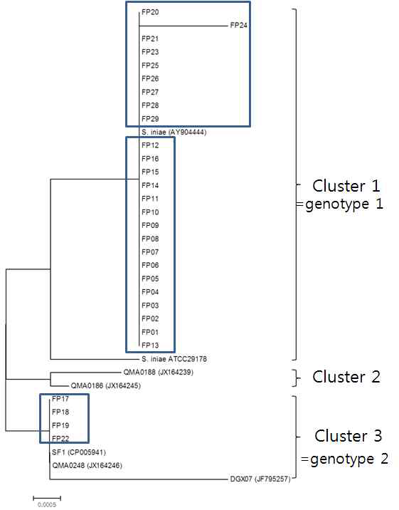 Phylogenetic tree of cpsD of genome sequenced S. iniae