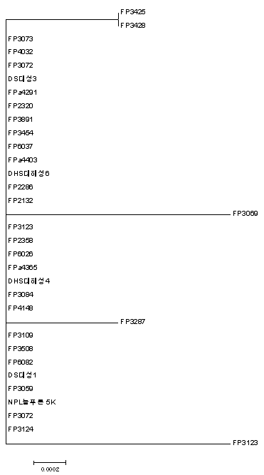 Phylogenetic tree of 16S rDNA of genome sequenced S. parauberis