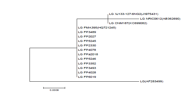 Phylogenetic tree of 16S rDNA of genome sequenced L. garveiae