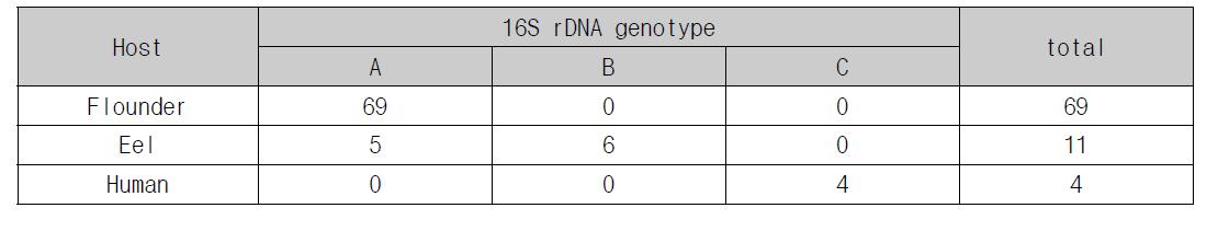 Genotype distribution of E. tarda by origin