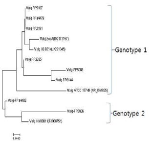 Phylogenetic tree of 16S rDNA of genome sequenced V. alginolyticus