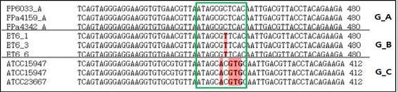 Selection of 16S rDNA diversity site for E. tarda subtype discrimination
