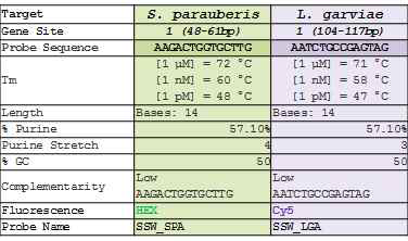 Tm value preanalysis of PNA probe for S. parauberis and L. garvieae discrimination