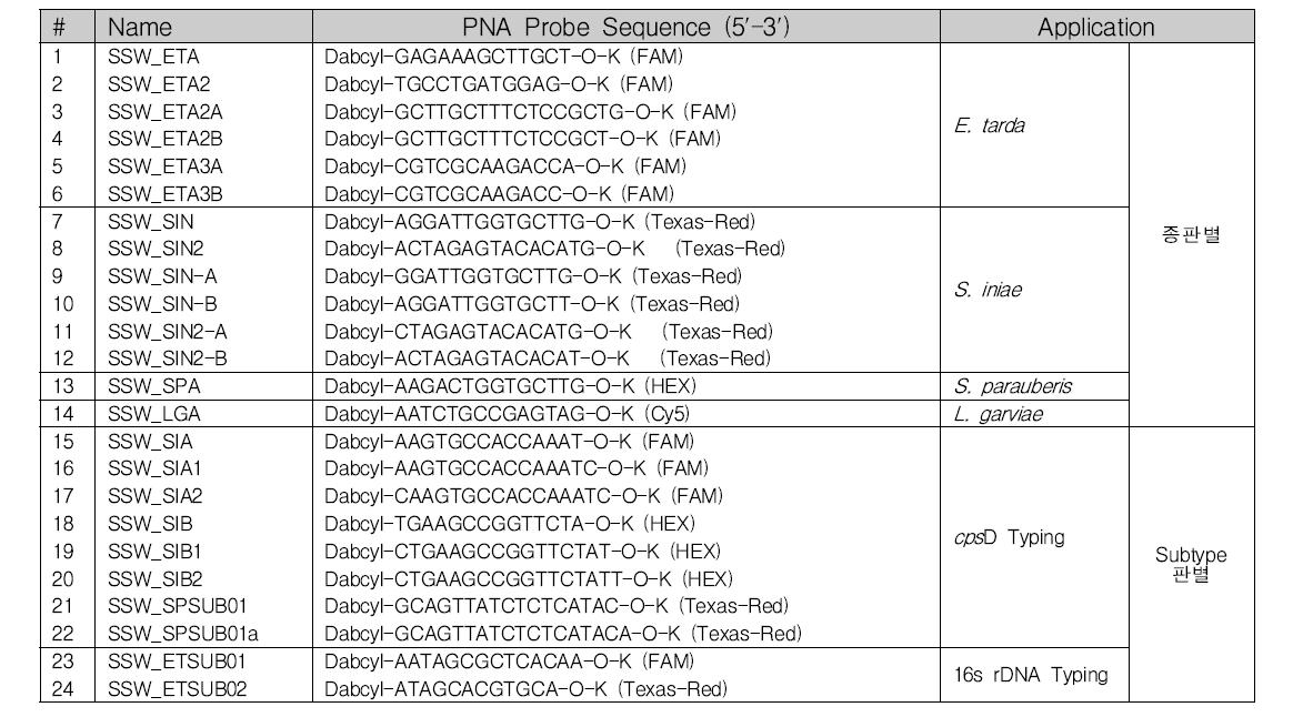 PNA oligomer sequence