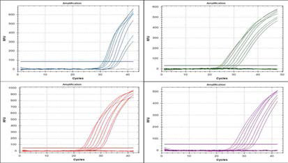 measuring amplification points of each dilutant for quantitative analysis of PNA RT-PCR