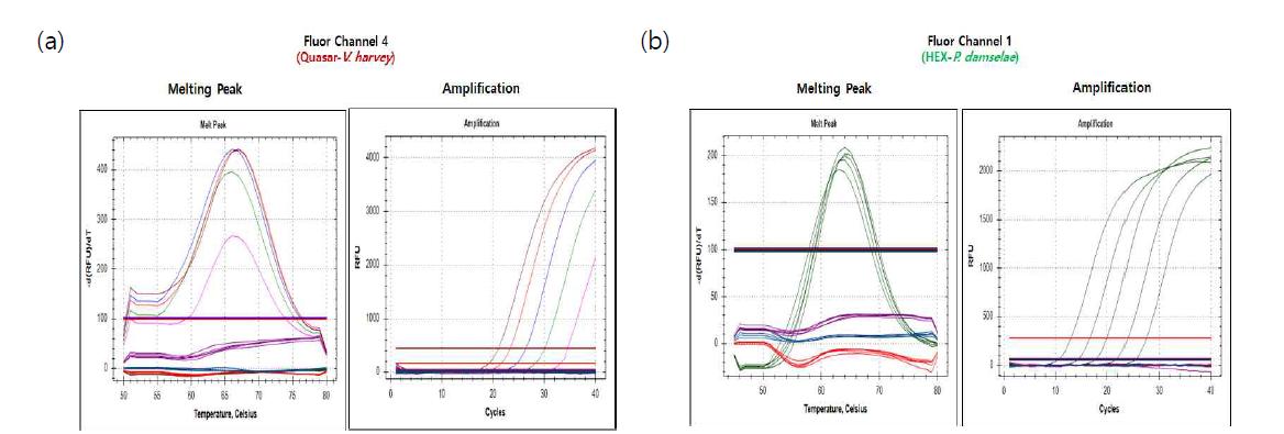 Sensitivity of PNA real-time PCR. (a)V. harveyi, (b)P. damselae