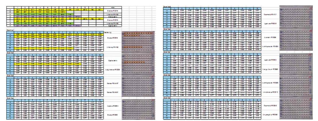 Results of autoreactivity and cross-reactivity of monoclonal antibody of V. harveyi