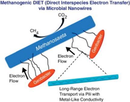 전도성 선모(pili) 통한 전자직접전달에 의한 메탄 발생 메커니즘